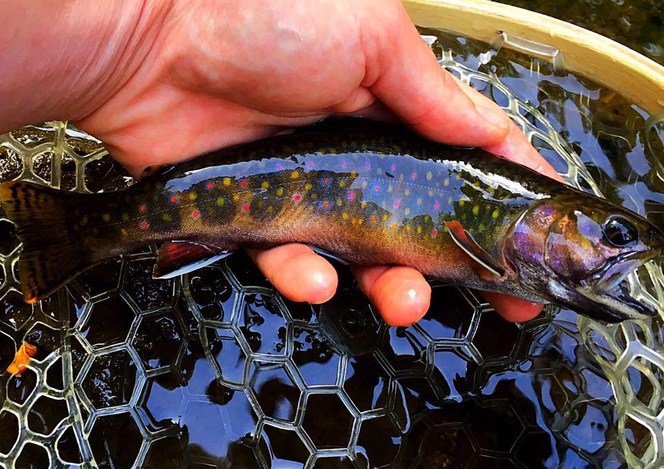 Free fishing weekend fayetteville west virginia visit for Wv fish stocking